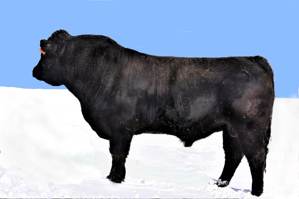 Beefmaker 116D