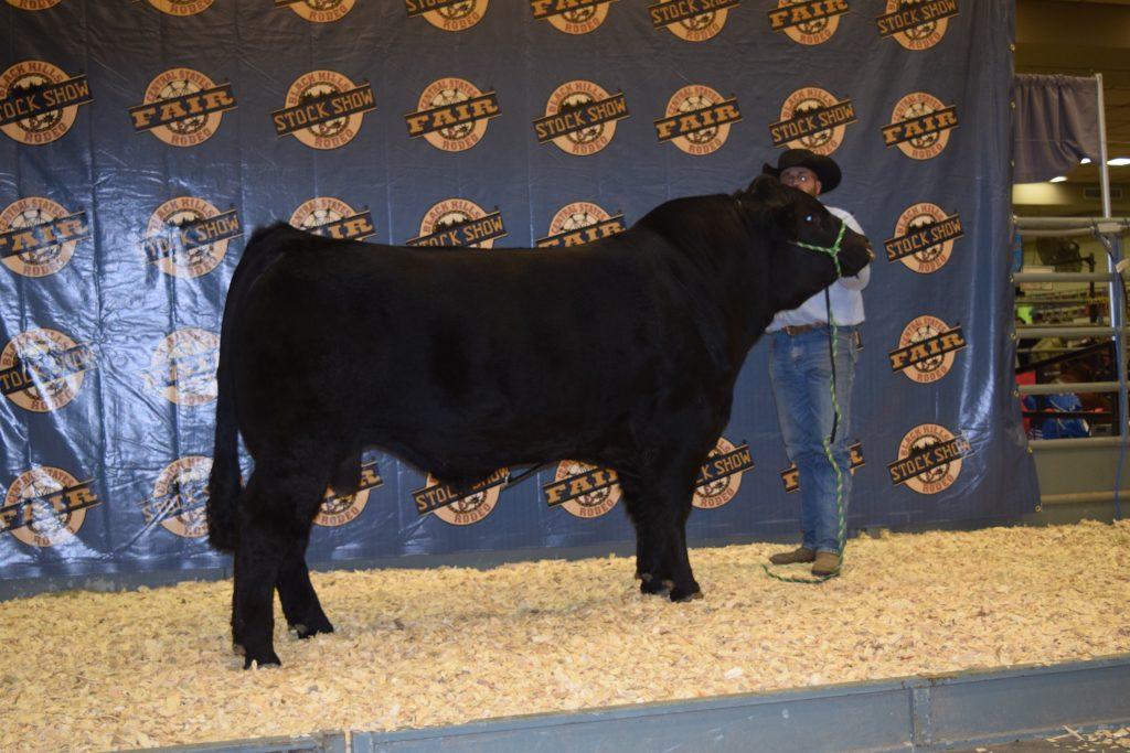 Bull for Sale